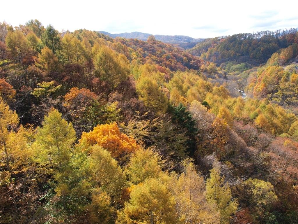川上大橋から望む渓谷の紅葉