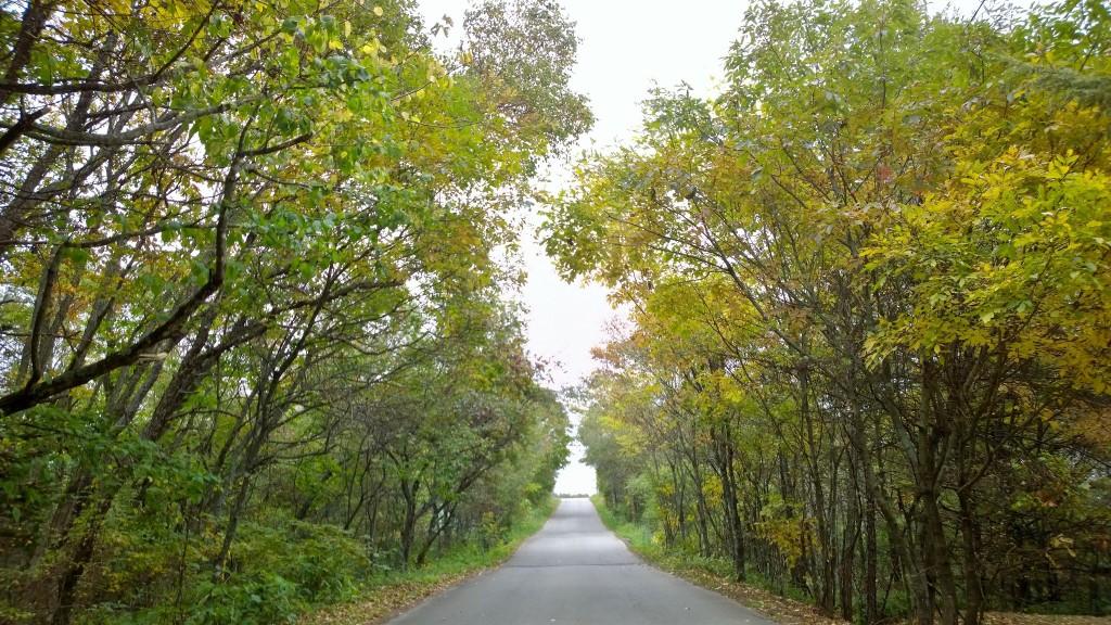 紅葉の小道