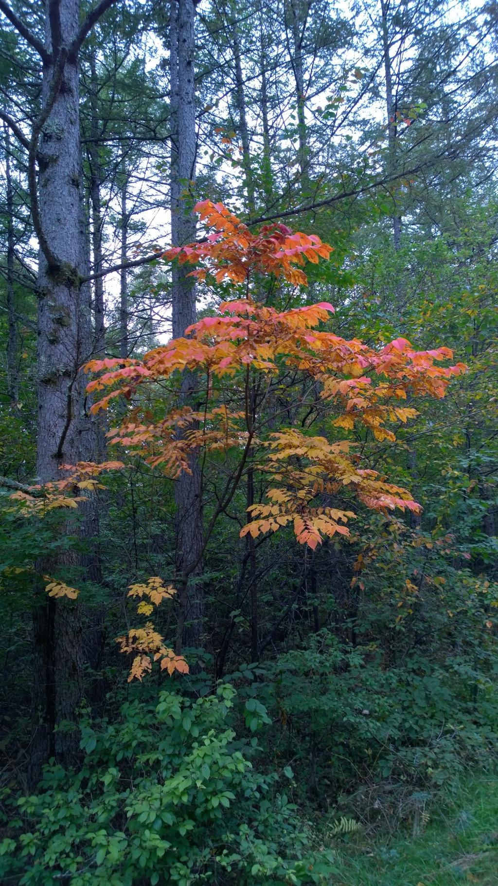 森の小さな彩