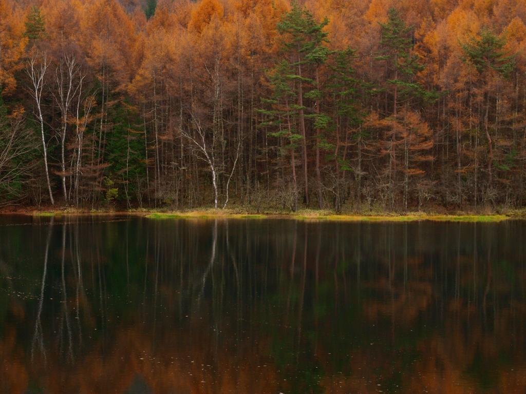 御射鹿池の落葉松黄葉141102_3