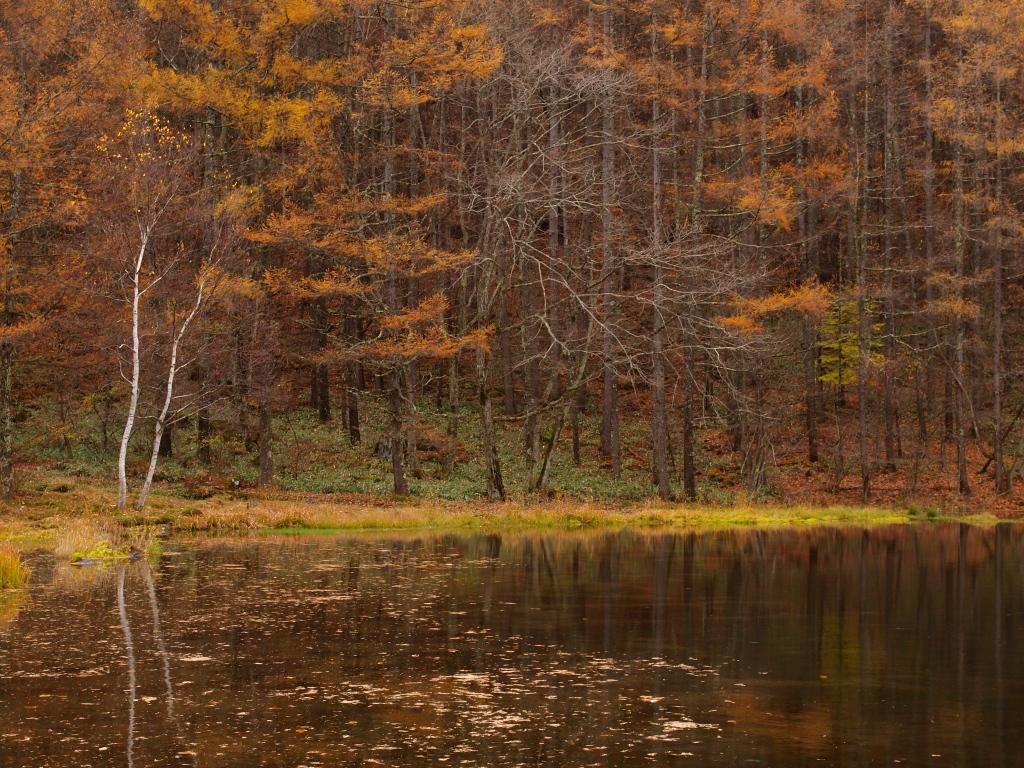 御射鹿池の落葉松黄葉141102_6