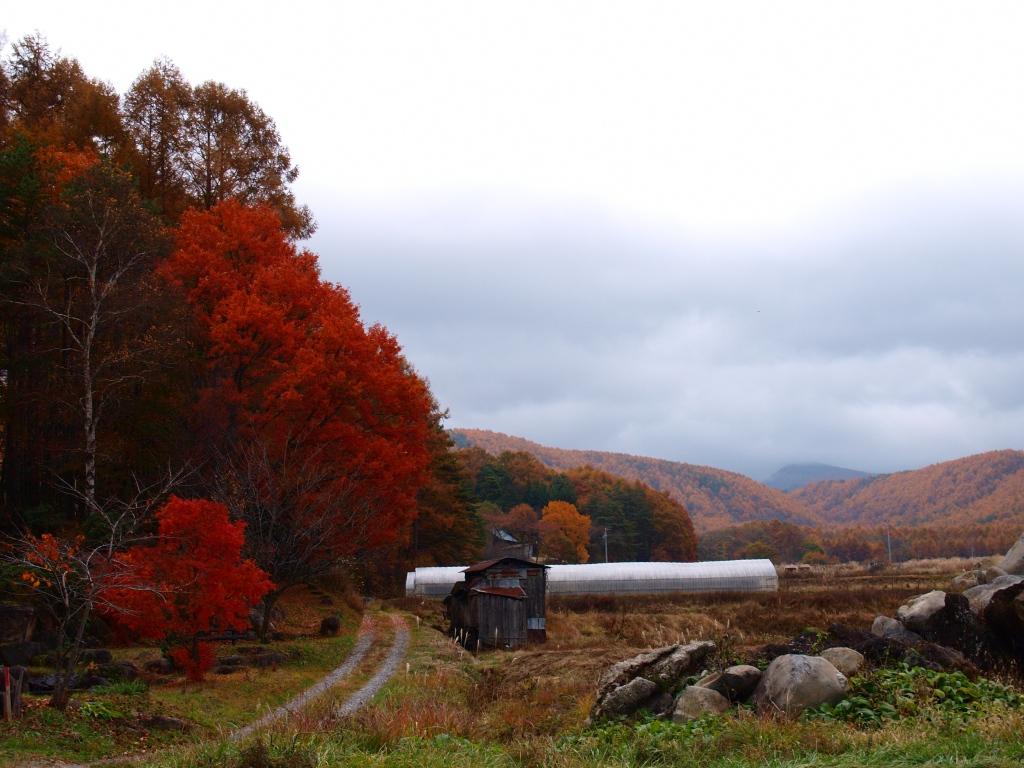 笹原集落から黄葉する山々2