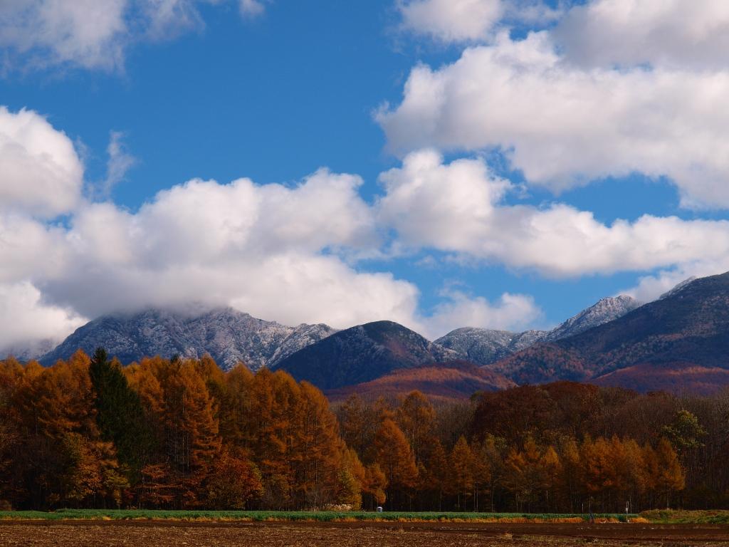 落葉松の黄葉と冠雪した八ヶ岳20141103_4