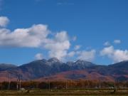 落葉松の黄葉と冠雪した八ヶ岳20141103_1