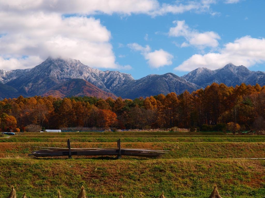 落葉松の黄葉と冠雪した八ヶ岳20141103_5