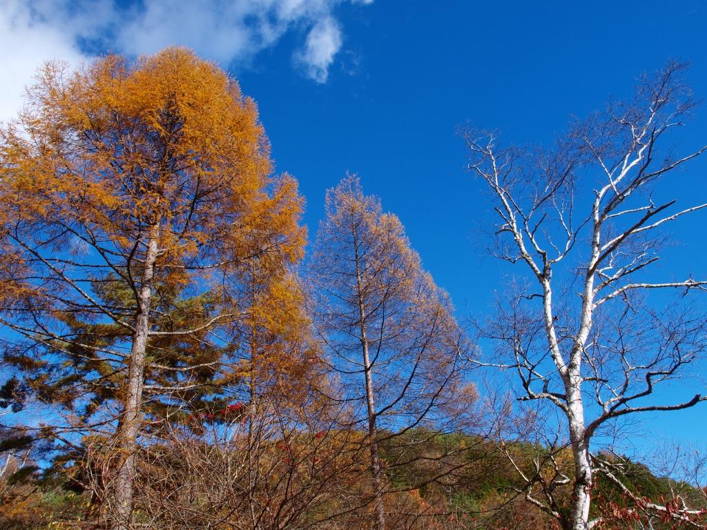 千代田湖の落葉松黄葉20141103_3