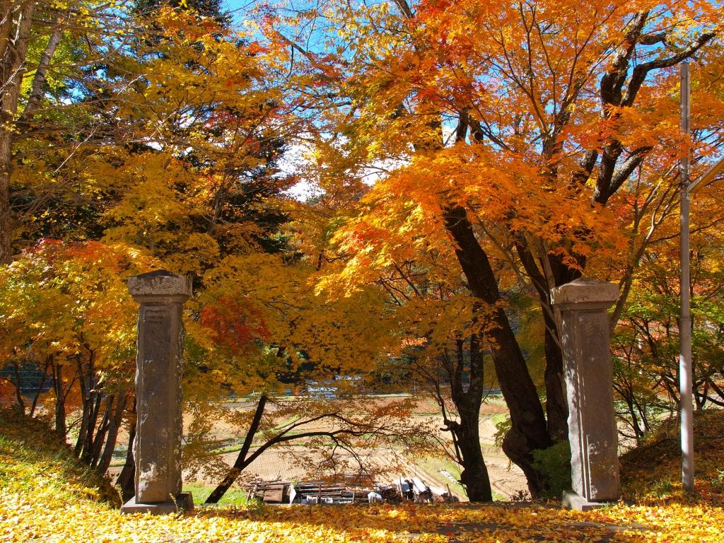 旧藤沢小学校のモミジ紅葉20141103_1