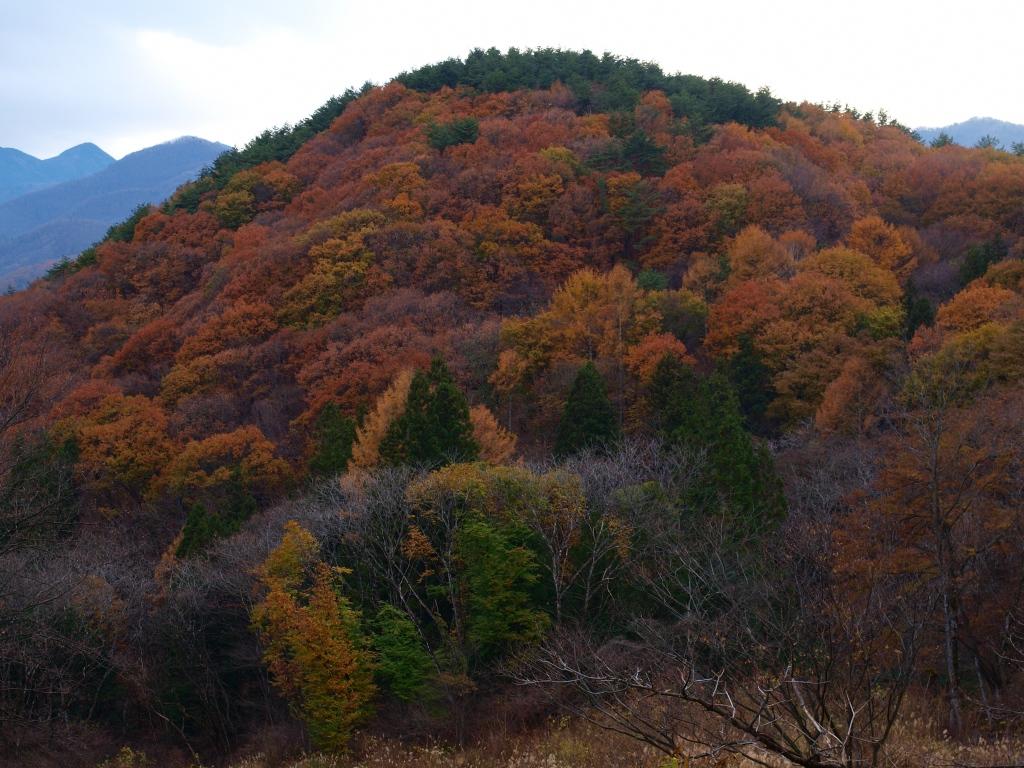 紅葉する里山