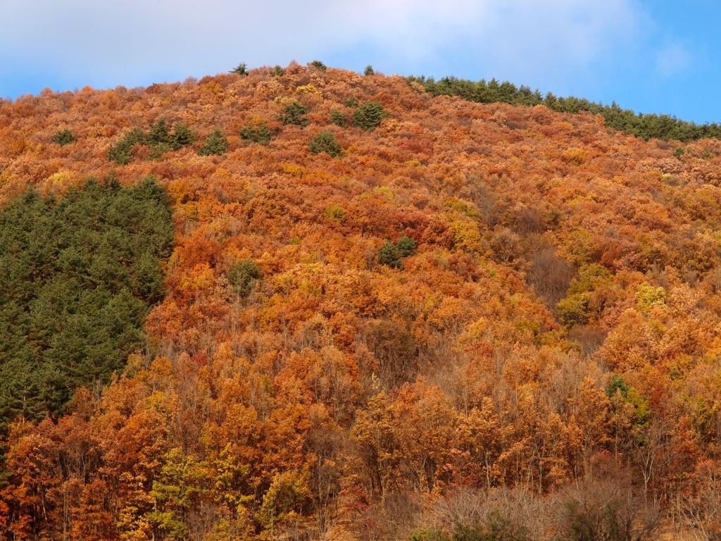 入山辺の紅葉