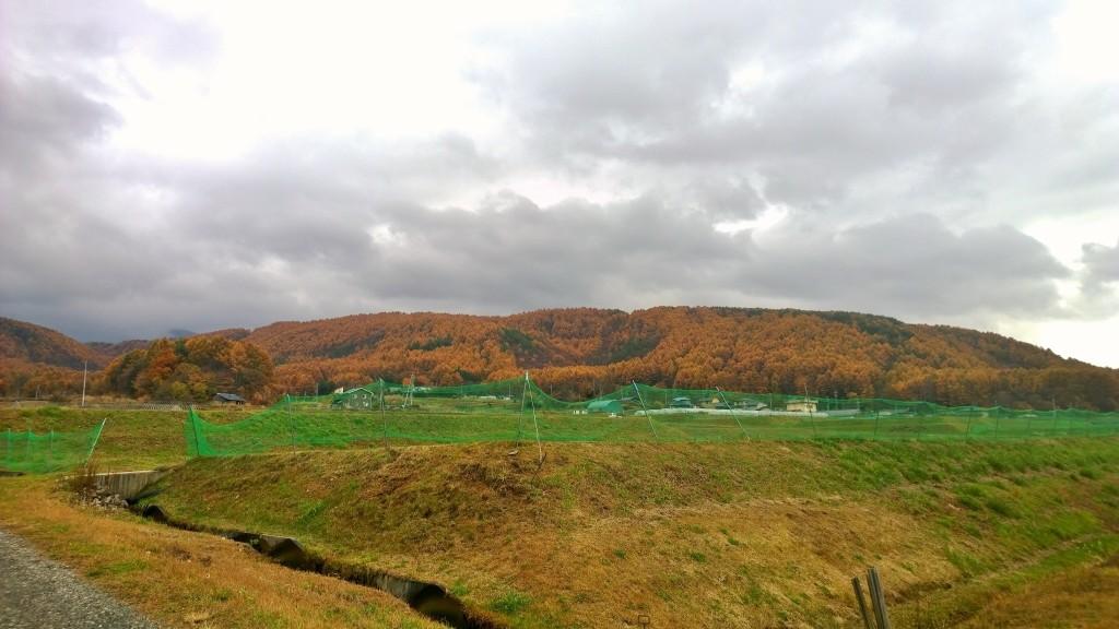 笹原集落から黄葉する山々1