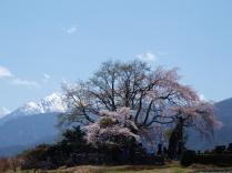 4月:富士見町田端