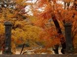 11月:伊那市高遠町藤沢