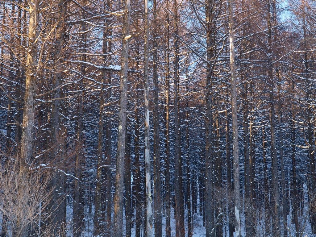 雪と落葉松の杜2