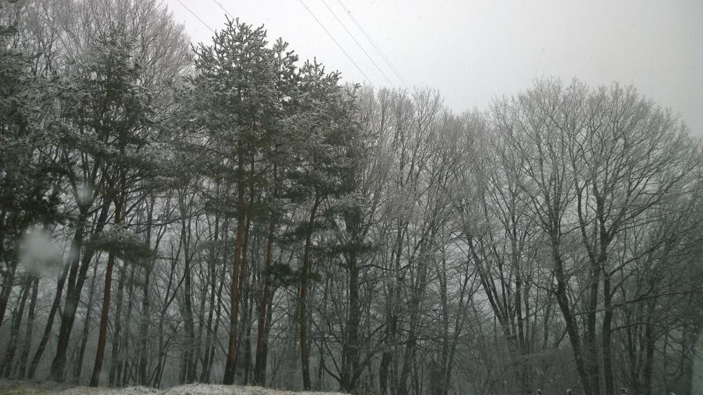 雪空と木立
