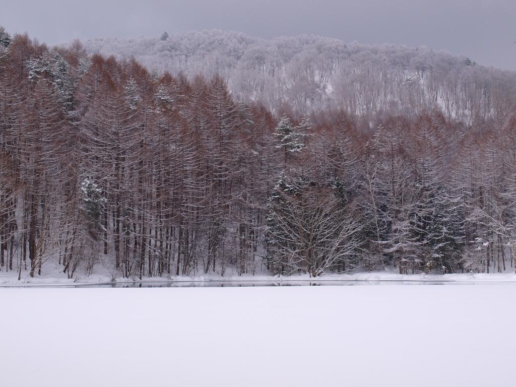 雪の御射鹿池8