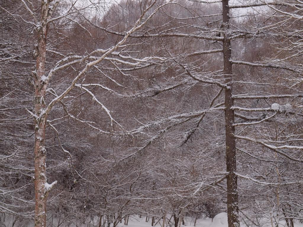 雪の御射鹿池4