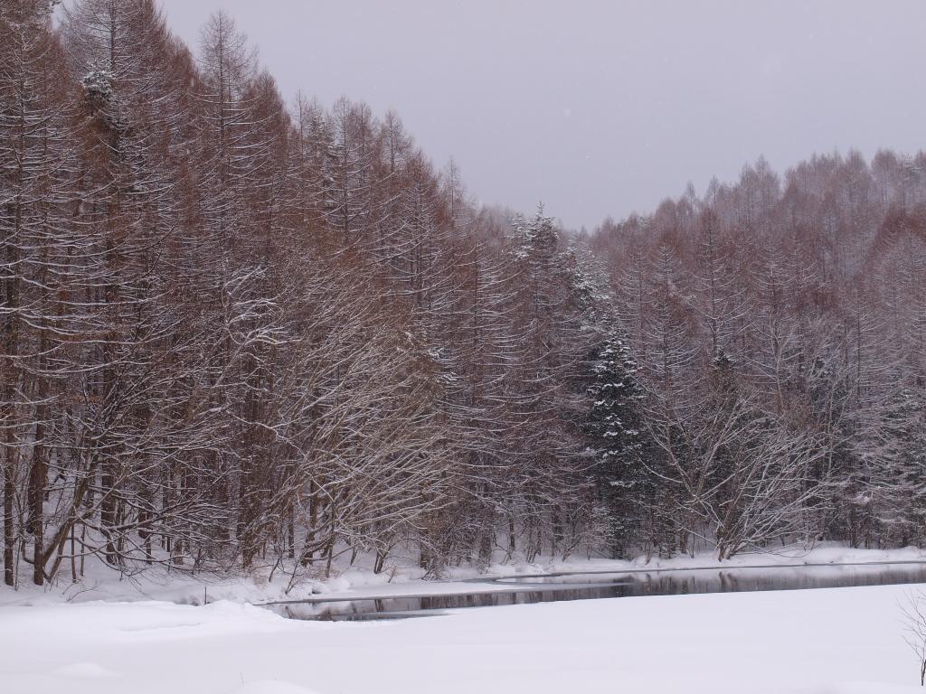 雪の御射鹿池3