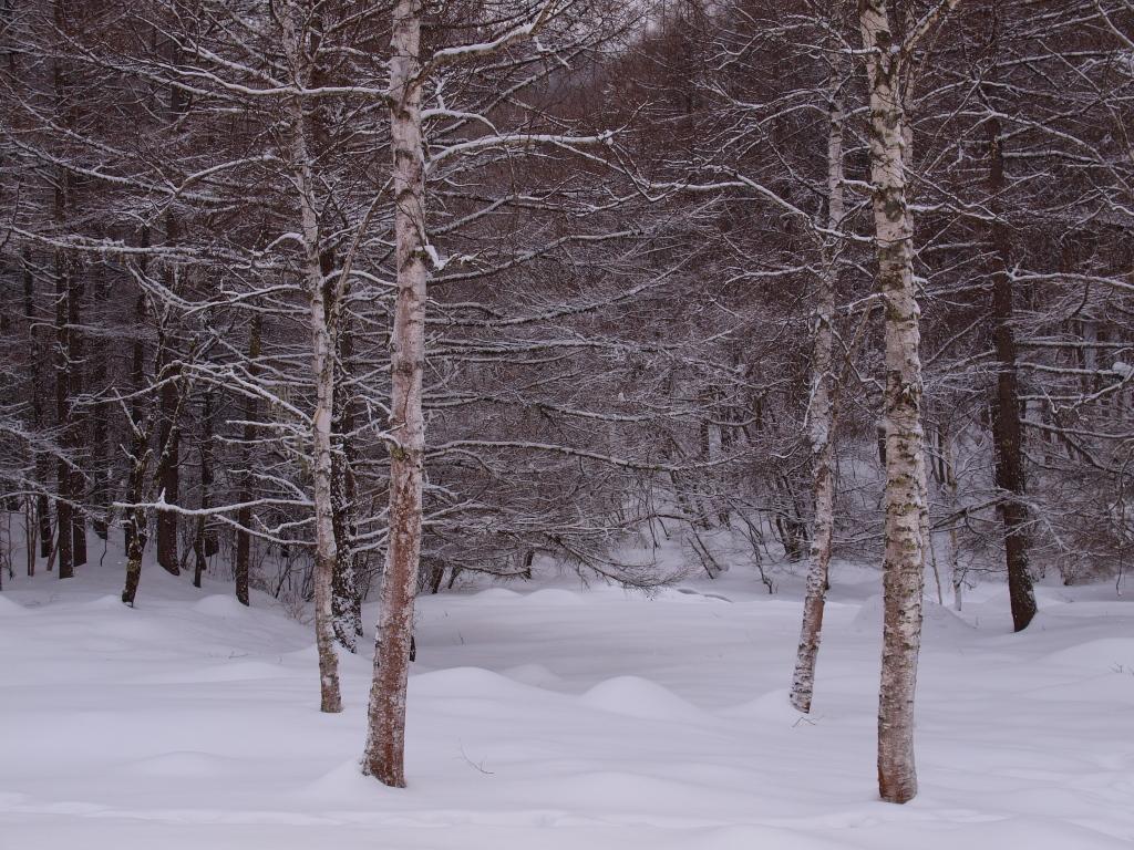 雪の御射鹿池5