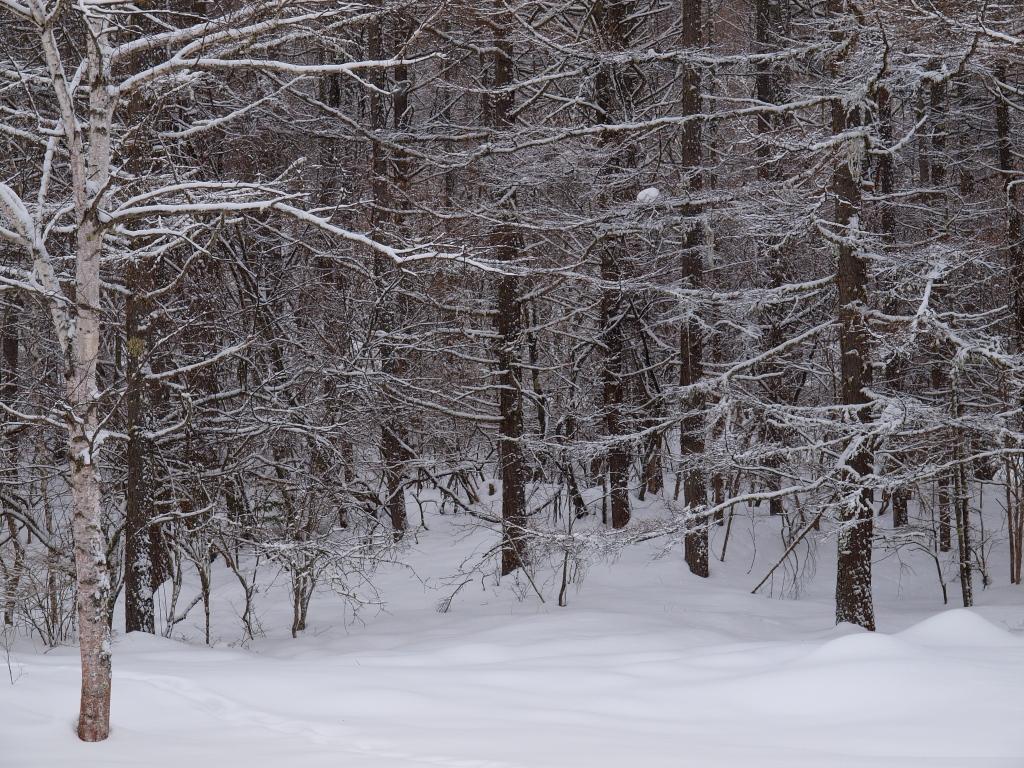 雪の御射鹿池6