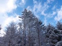 碧空と樹氷