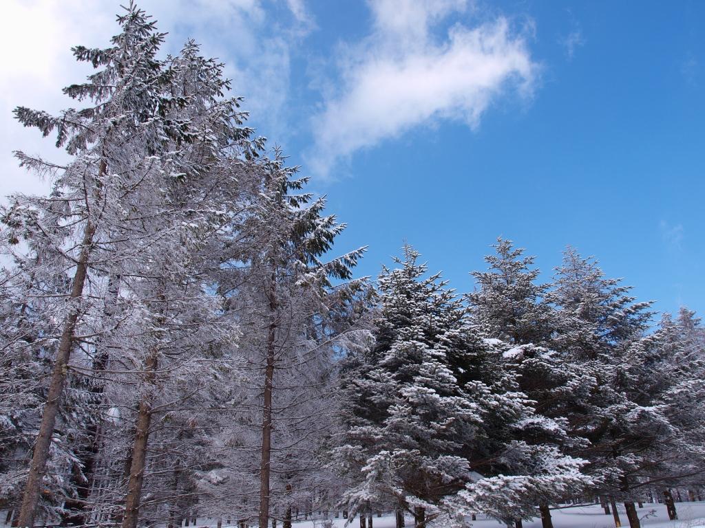 碧空と樹氷2