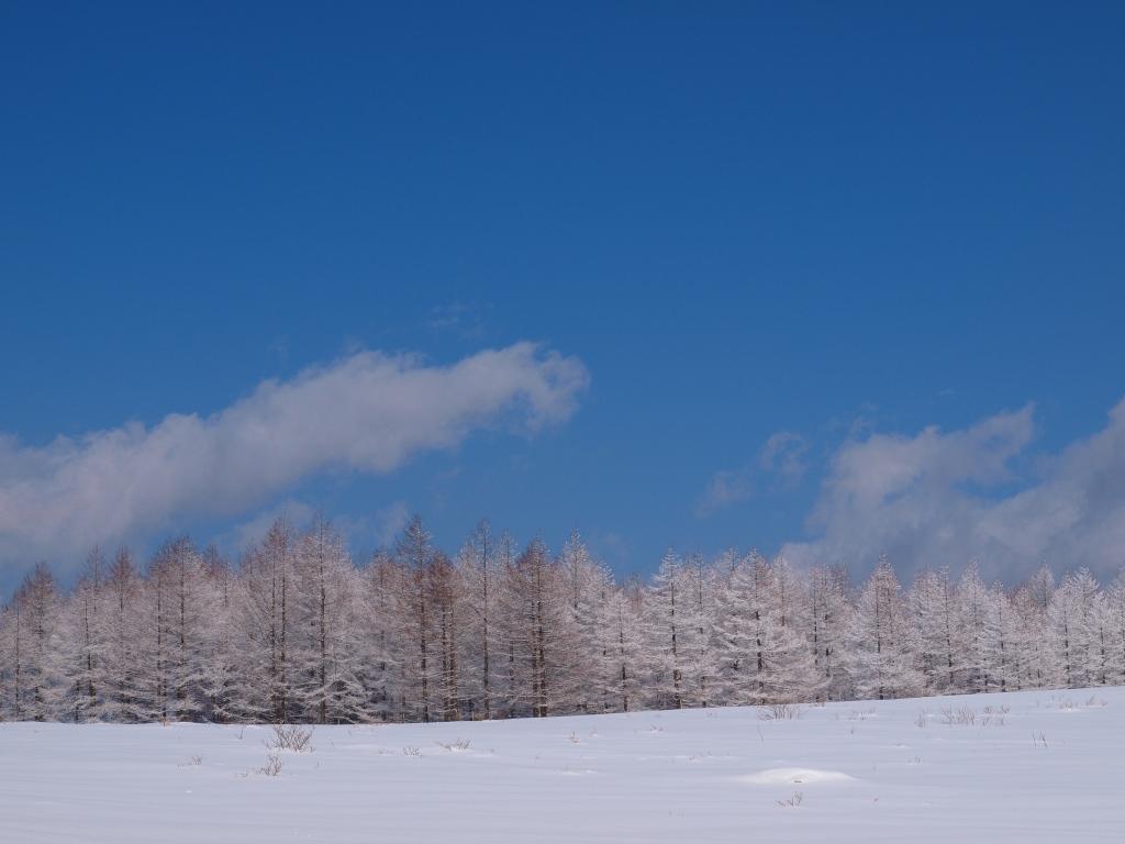 碧空と樹氷3