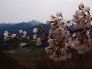 甲斐駒と枝垂桜6