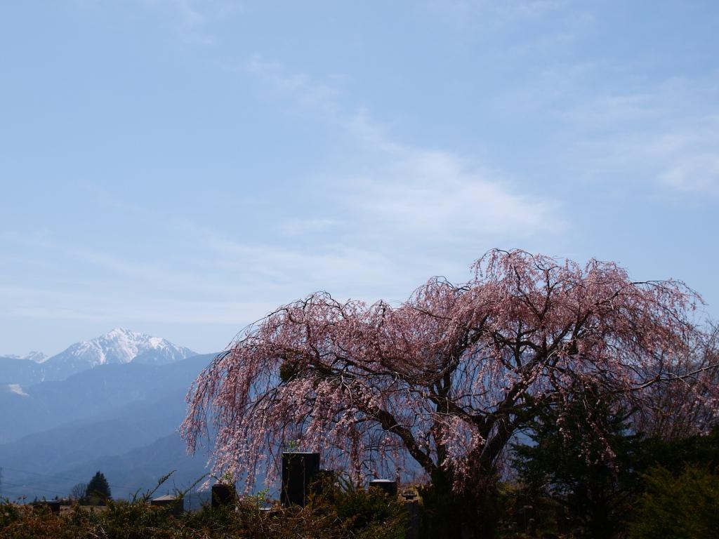 葛窪地籍の枝垂桜と甲斐駒