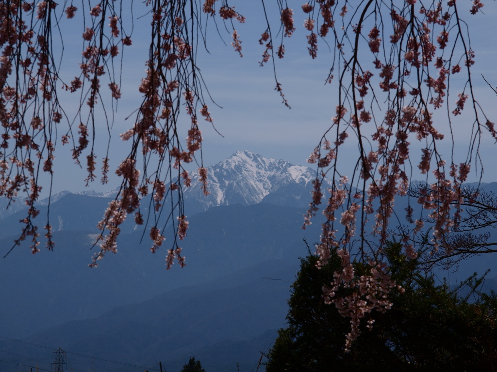 枝垂桜と甲斐駒