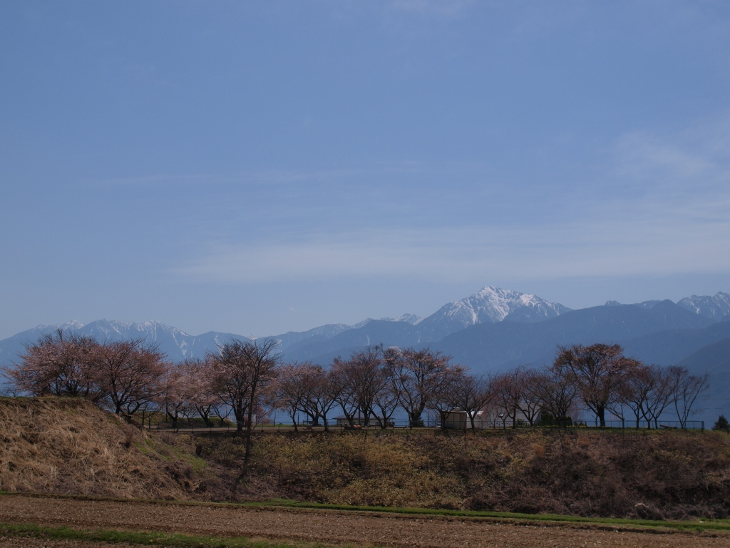 開花を始めた桜と南アルプスの山並み
