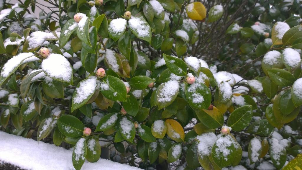名残雪の朝1