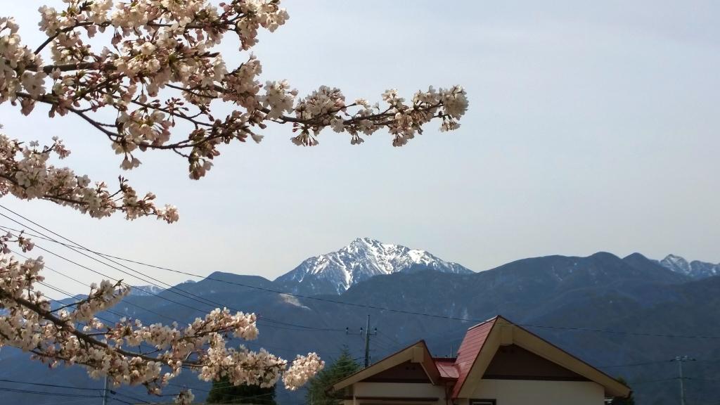 桜と甲斐駒