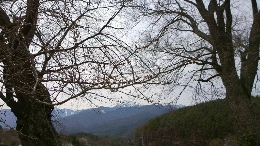 鼎談桜の芽吹きと甲斐駒