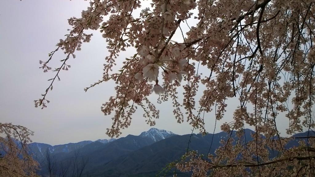 甲斐駒と枝垂桜2