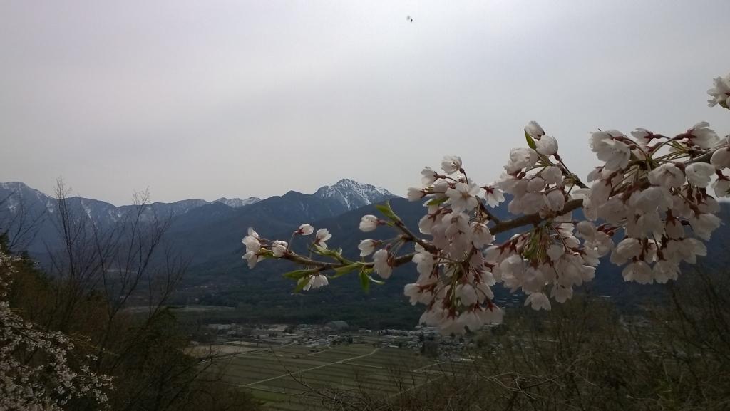 甲斐駒と枝垂桜1
