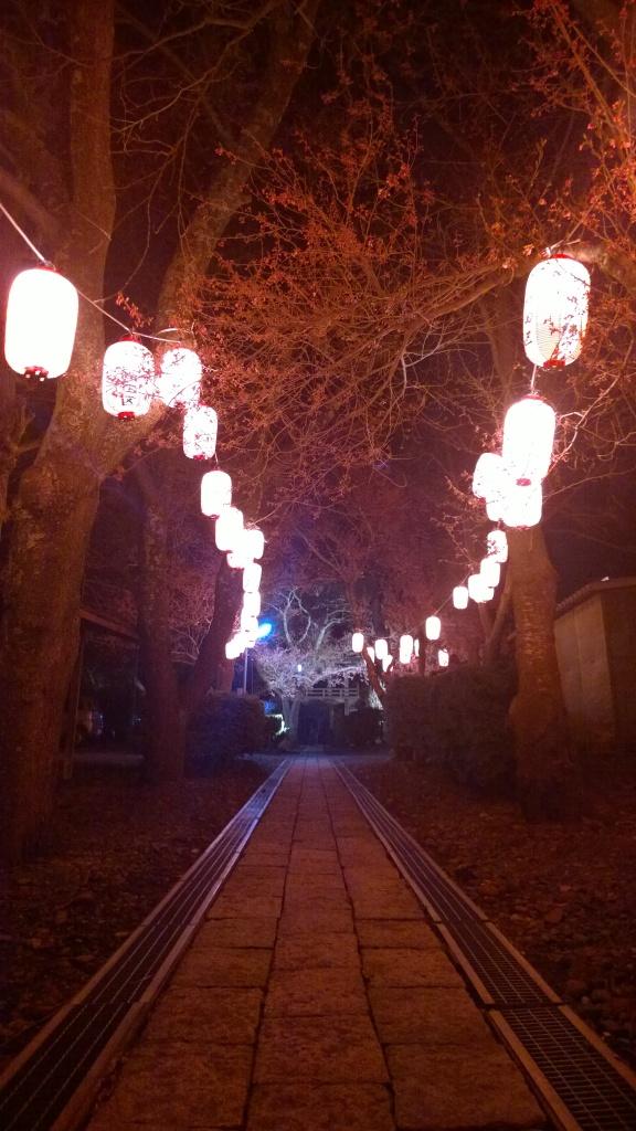 深叢寺の夜桜3