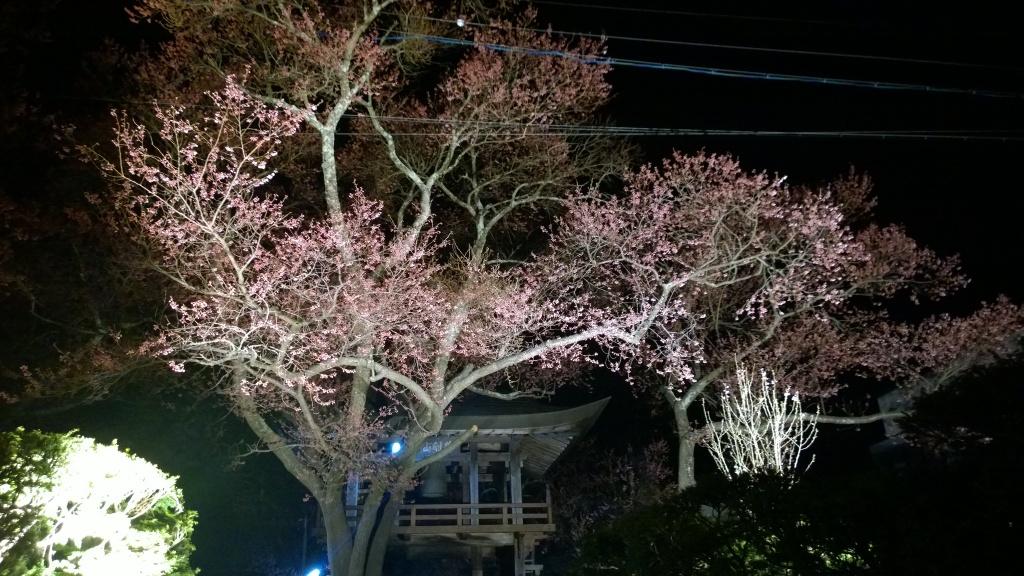 深叢寺の夜桜2