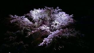 高森観音堂の夜桜