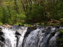 新緑と多留姫の滝1