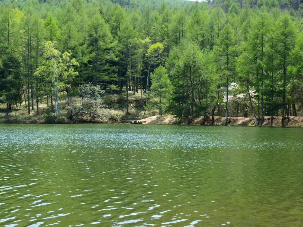 新緑の千代田湖