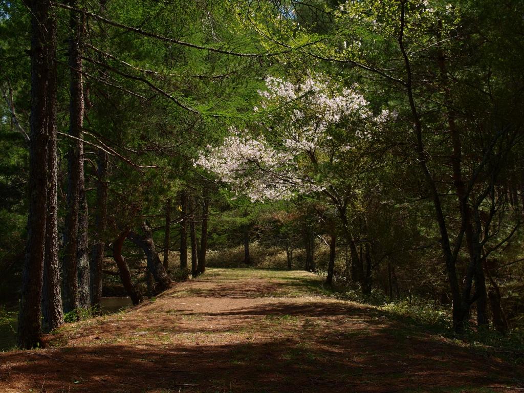 新緑の小路