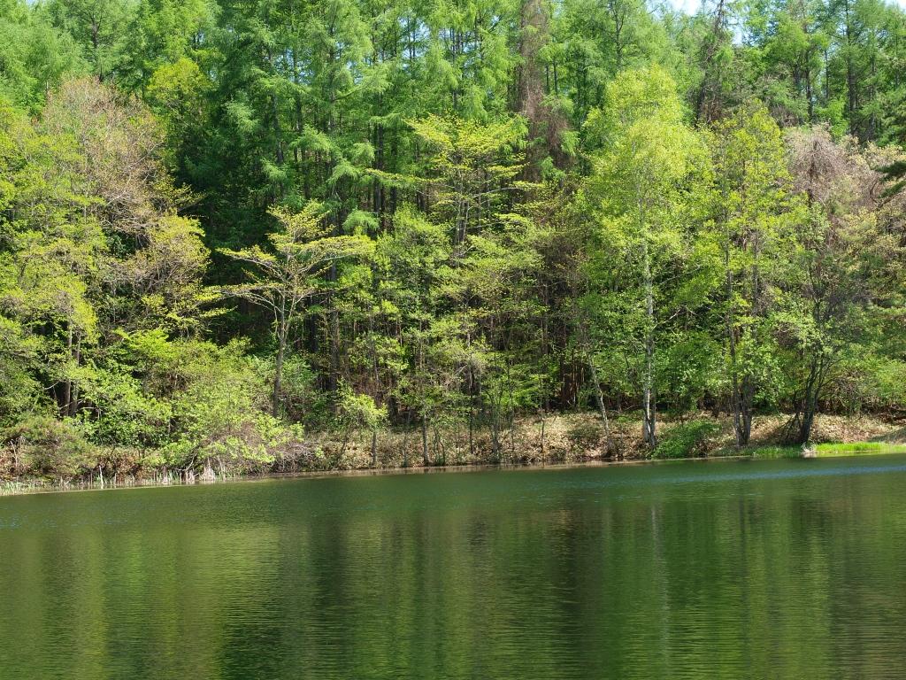 新緑の笹原溜池