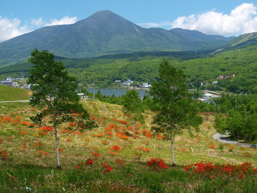 レンゲツツジと蓼科山、白樺湖