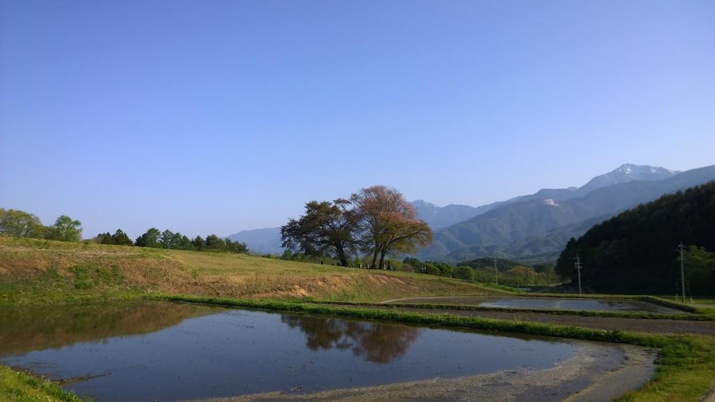 甲斐駒と鼎談桜