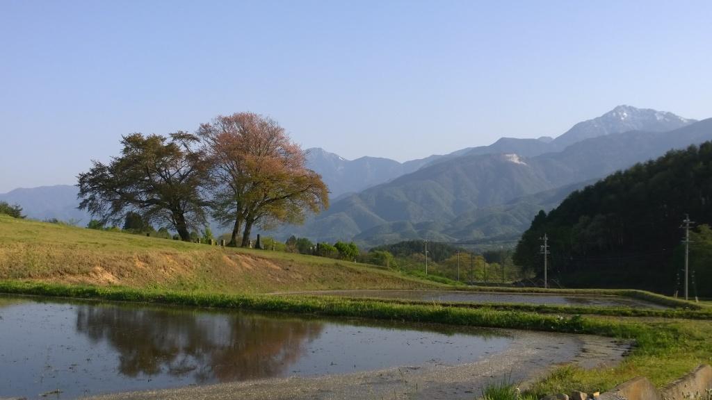 甲斐駒と鼎談桜2