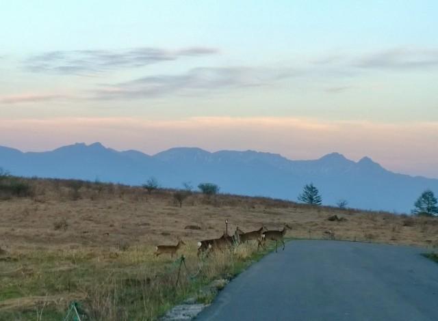 夕暮れの霧ヶ峰から望む八ヶ岳と鹿の群れ