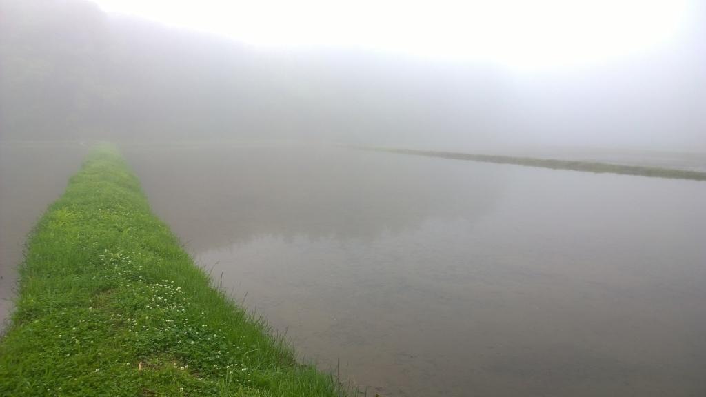 濃霧の朝3