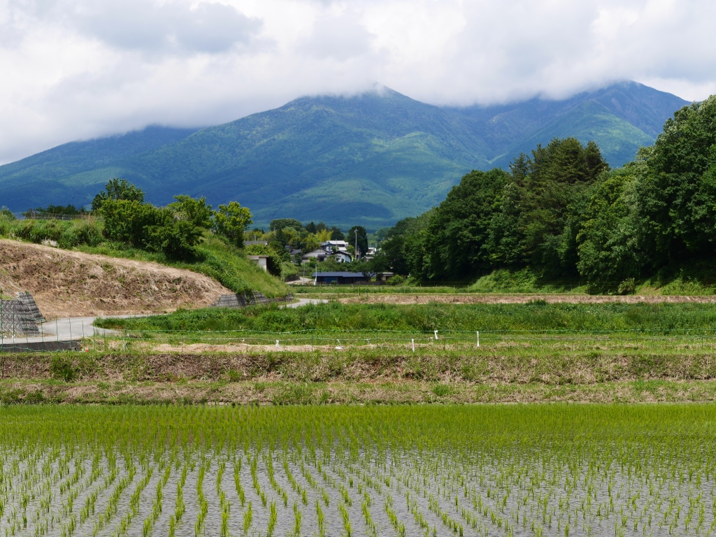 LumixGM5試写2八ヶ岳と水田