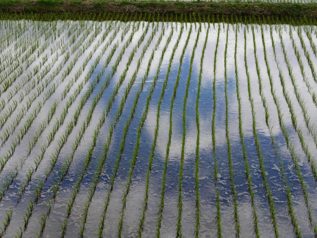 LumixGM5試写3水田の水面に映る雲