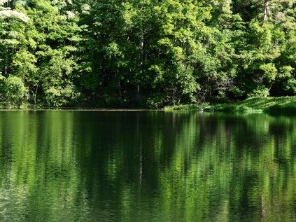 LumixG5試写17笹原溜池の緑